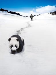熊猫回家路 国语