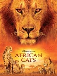 非洲大猫(超清)