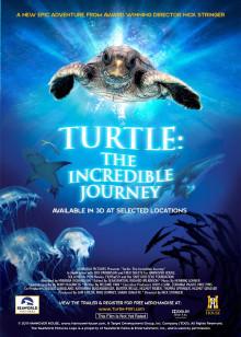 海龟神奇之旅