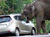 大象趁游客自拍 一口将皮包吞下