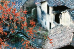 传统村落的文化复兴——浙江松阳采访记