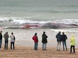 20吨重鲸鱼搁浅爱尔兰岛海滩