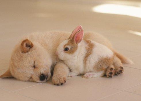 小狗狗动物