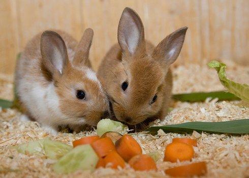兔子风景图片大全大图