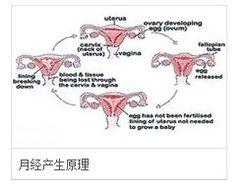 溶脂会影响月经吗