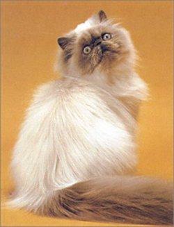 壁纸 动物 猫 猫咪 小猫 桌面 250_327 竖版 竖屏 手机