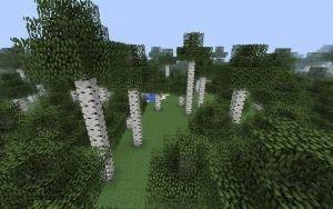 Birch forest m.jpg