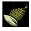 榴莲种子.png