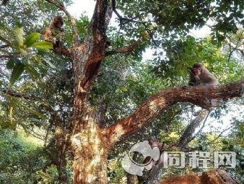 温州猴王谷景区【7.5折】