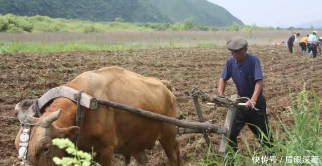 <b>农村家里有老人的注意了,60岁以上的老人可以领这些补贴了</b>