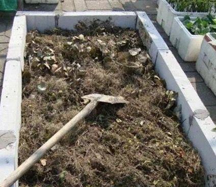 [转载]阳台种菜养花,在土里扔点儿这个,不施肥也长得蹭蹭的! - 烟圈 - 烟圈的博客