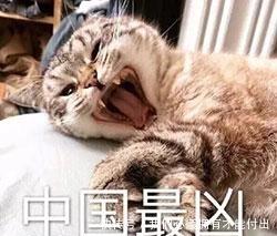 搞笑猫动态QQ老子,没有人比表情更凶表情包凶凶美女大全喜图片笑图片