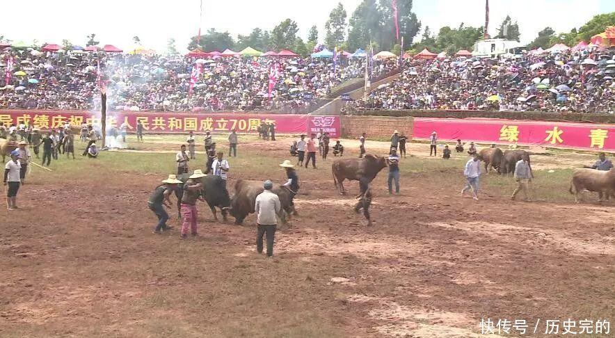火把节期间长湖民族文化活动广场举行民族传统斗牛比赛
