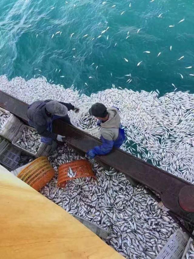 男子深海捕鱼鱼群突然浮出:画面让人惊叹 - 后老兵 - 雲南铁道兵战友HOU老兵博客;