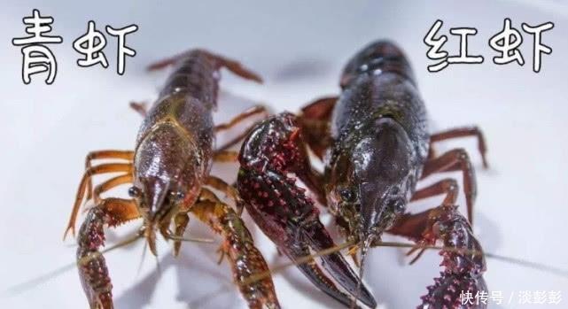 """""""青虾""""和""""红虾""""哪种才新鲜的?很多人总弄混,难怪便宜味道差"""