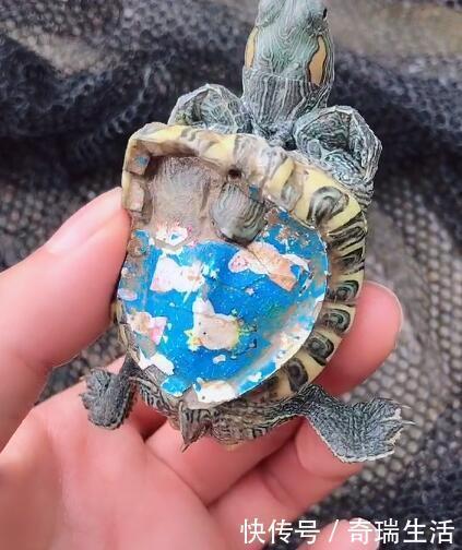 乌龟被染上漂亮颜色,过后不久龟发生变化,遭人厌烦抛弃