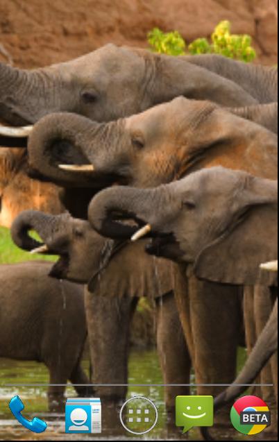 壁纸 大象 动物 402_637 竖版 竖屏 手机