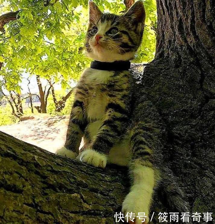 铲屎官带初中v初中,猫咪被一只小奶猫拦住求收小学半路对口天长图片