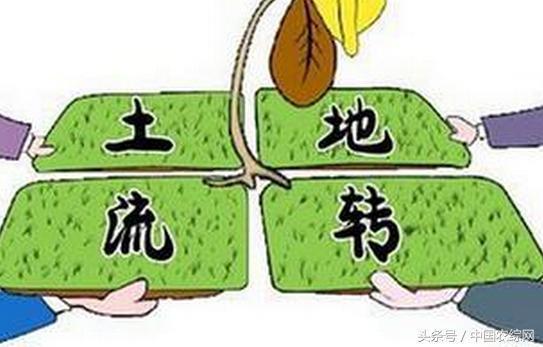明年起土地流转也能领补贴了,每亩100元! - 周公乐 - xinhua8848 的博客