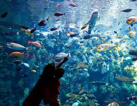 壁纸 海底 海底世界 海洋馆 水族馆 459_356