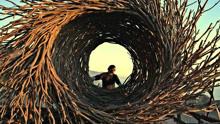 艺术家的鸟巢房屋,体验鸟儿的视野