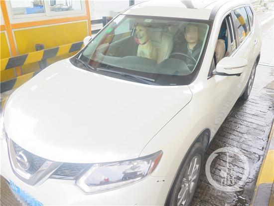 【转】北京时间     一家人走亲戚 狗坐副驾驶3人挤后排被罚款 - 妙康居士 - 妙康居士~晴樵雪读的博客