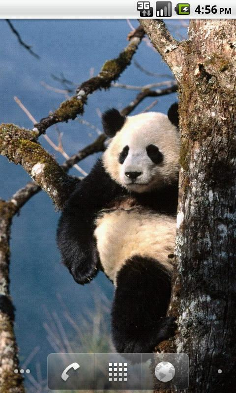 可爱熊猫动态壁纸_360手机助手