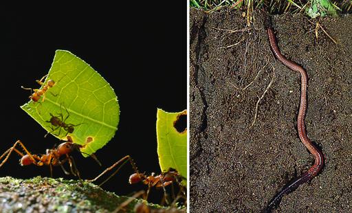 植物生长的土壤里有蚂蚁,蚯蚓,这说明了土壤里有什么
