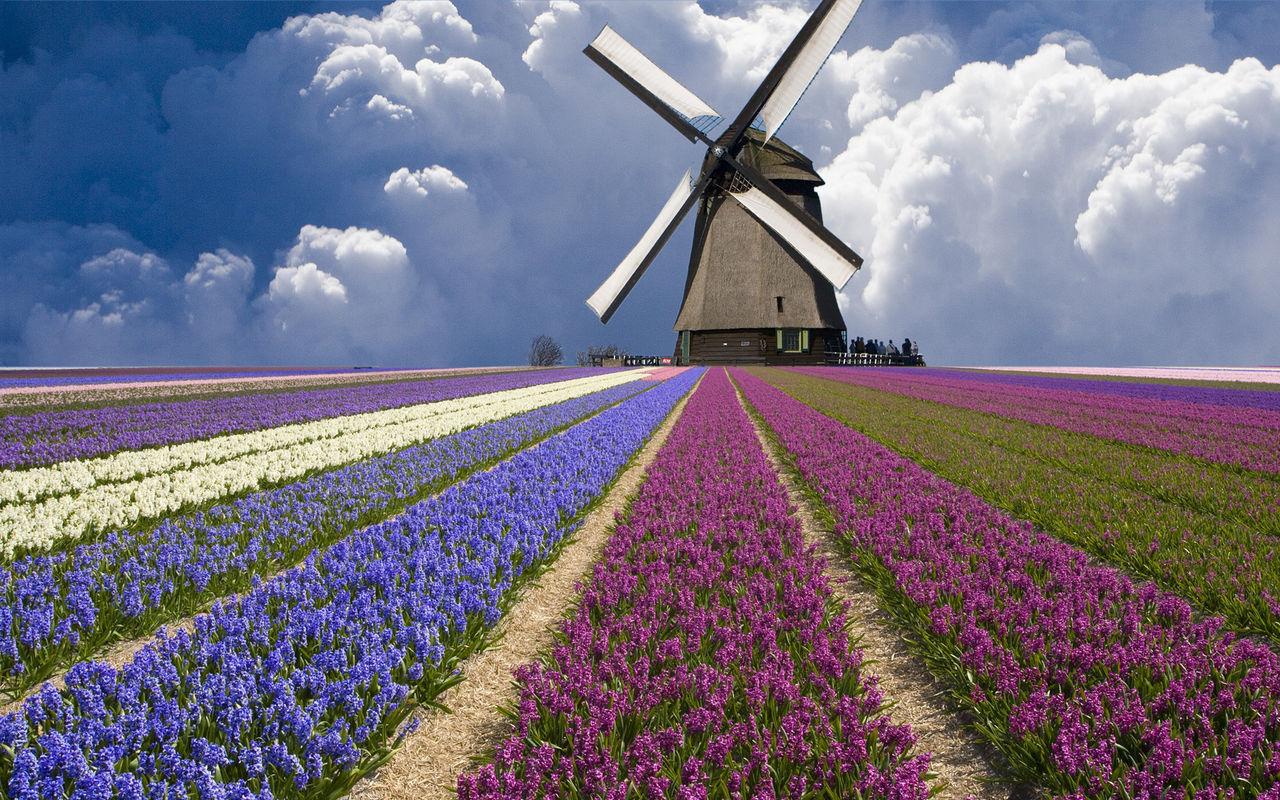 荷兰是世界上的风车王国,风车提供的能源是自然,环保的可再生资源,为