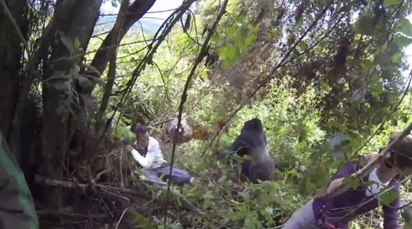 丛林大猩猩突袭背包客:众人当场吓懵 - 粉伊香 - 粉伊香