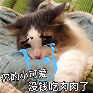 猫咪撒娇表情包6.jpg