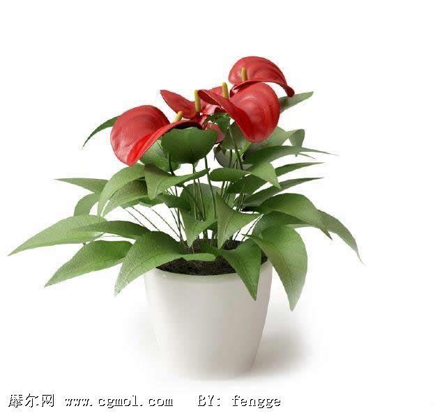 盆栽植物_好搜百科