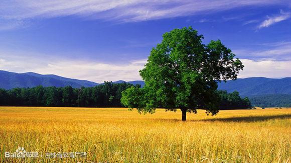 一个木子旁和一的果是什么字?