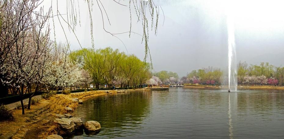 (转载)春风吹皱碧波水,植物园里满园春 - 及时渔、及时语 - 及时渔的空间