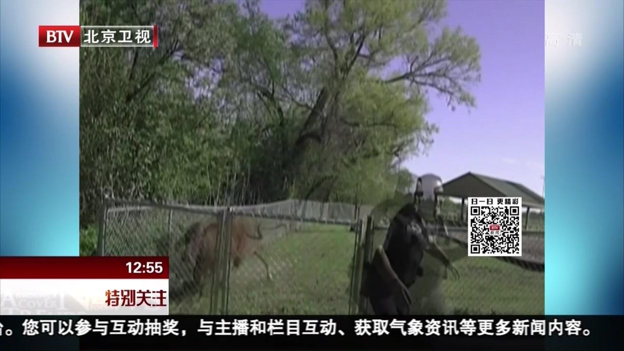 美国:警察追牛反被牛追