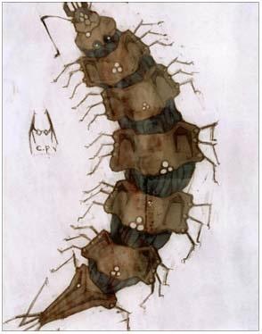 艾吉欧蜈蚣卡片