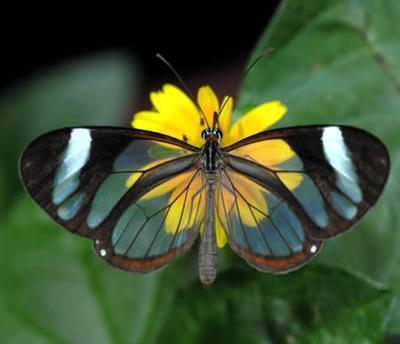 拟态是指某些动物在形状,色泽,斑玫等外表特性上与其它生物或非生物