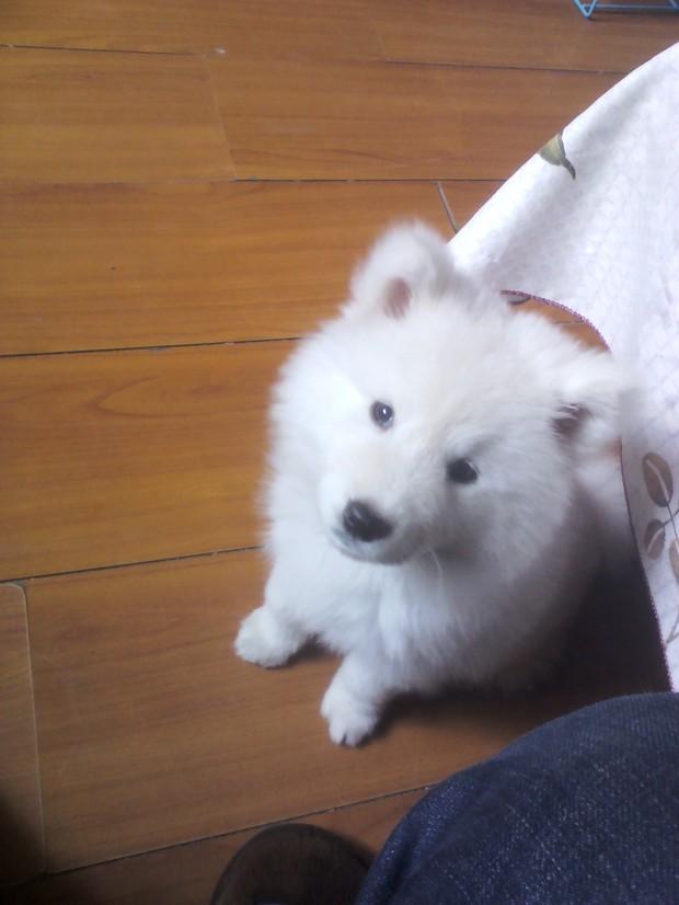 宠物狗图片及品种