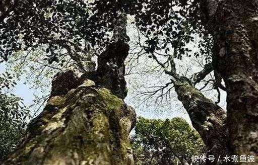 """这世上唯一一颗""""孤独""""的树,长在中国,专家至今未找出繁殖方法"""