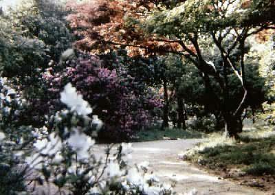园林植物配置