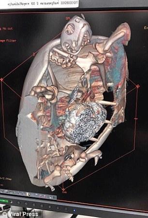 【转】北京时间      海龟误吞上千许愿硬币 撑破龟壳呼吸困难 - 妙康居士 - 妙康居士~晴樵雪读的博客