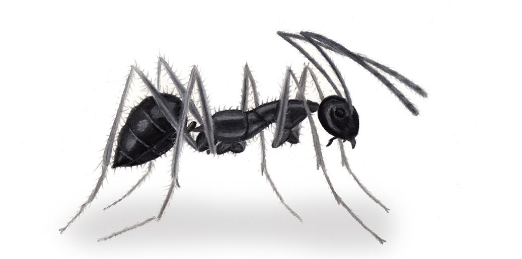 蚂蚁儿歌g大调简谱