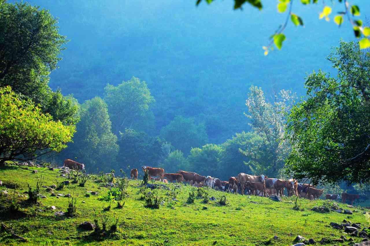 兴唐寺实验景区属太岳山国家森林公园八景区之一,位于洪洞县东北部,东