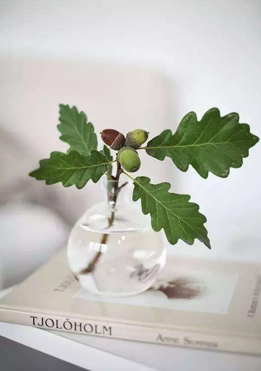 [转载]水里加点这个,植物5年翠绿不黄叶,简直神了 - 烟圈 - 烟圈的博客