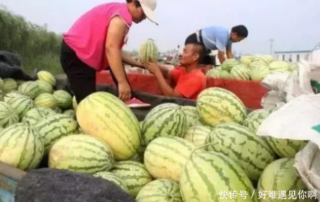 """同样是""""卖西瓜"""",日本价高,韩国精致,看到印度要用手抓"""