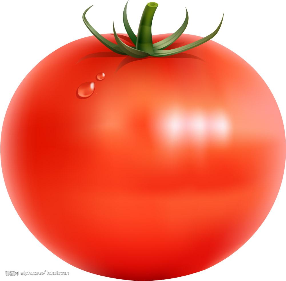 番茄手绘矢量图_水果_蔬菜