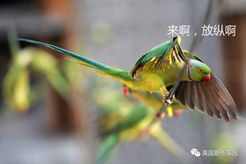 一群染上毒瘾的鹦鹉 跟罂粟田的农民杠上了