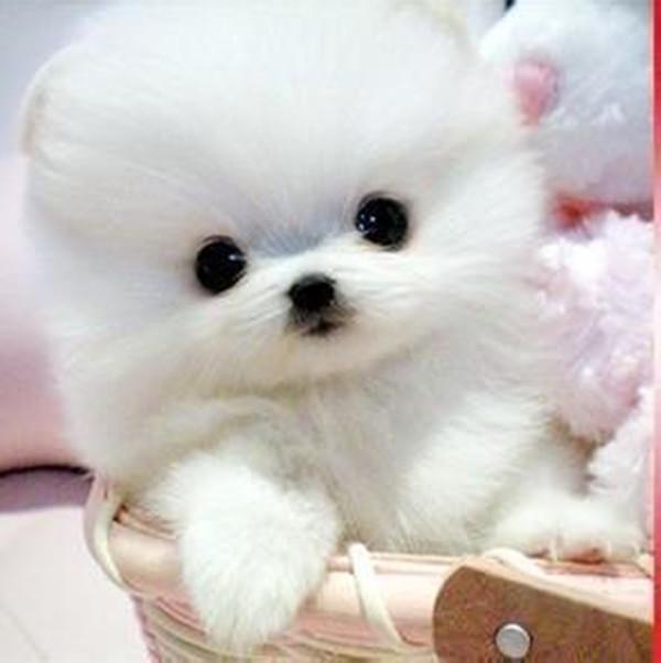 世界上最可爱的小狗叫什么?(最好带图片)