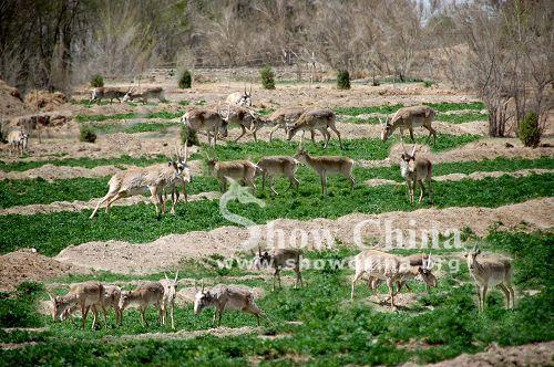 武威神州荒漠野生动物园