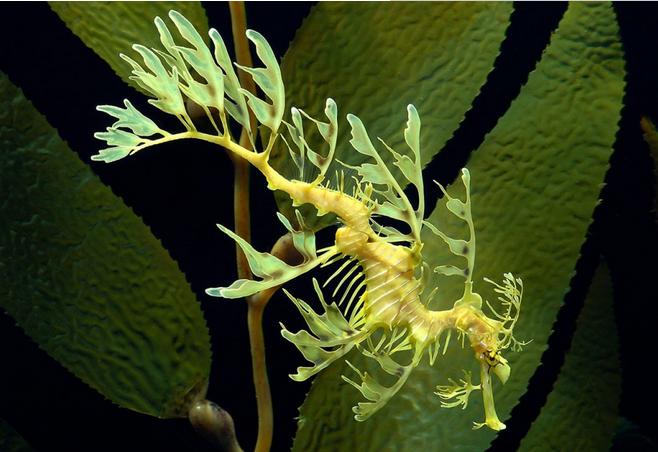 世界上最诡秘的25种海底动物